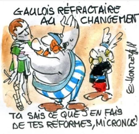 Gaulois Réfractaire