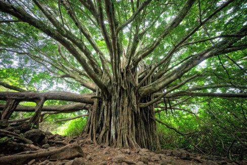 arbrepuissance